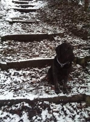 Snow update 1-1