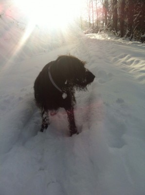 Snow update 1-5