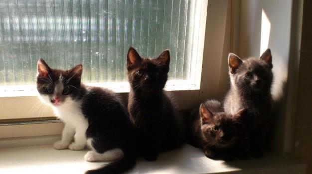 Die Katzenbabys...nanu fehlt da nicht wer?