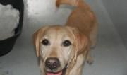 Portrait Dingo