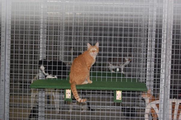 Katzen 1 DSC_0331