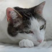Portrait Moomine