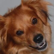 Portrait Roucky