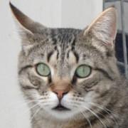 Portrait Sirius