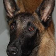 Portrait Igor