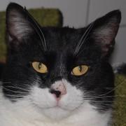 Portrait Zorro