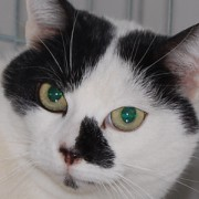 Portrait Lola