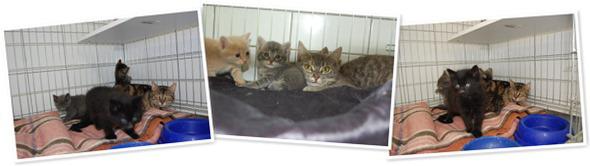 Katzenbabys-Futterspende
