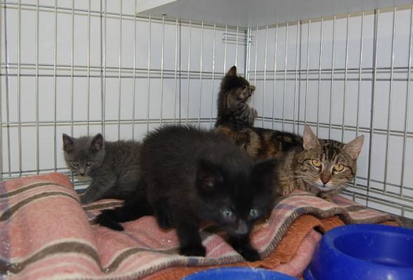 Katzenbabys mai 2015-2