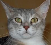Portrait Opale