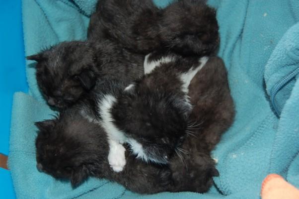 Katzenbabies 2-1