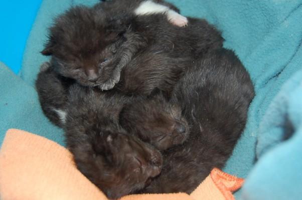 Katzenbabies 2-3