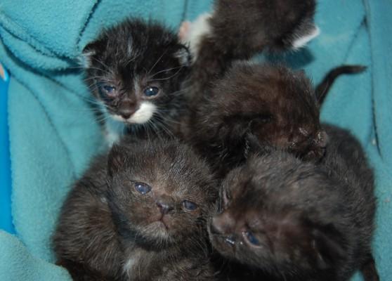 Katzenbabies 2-4