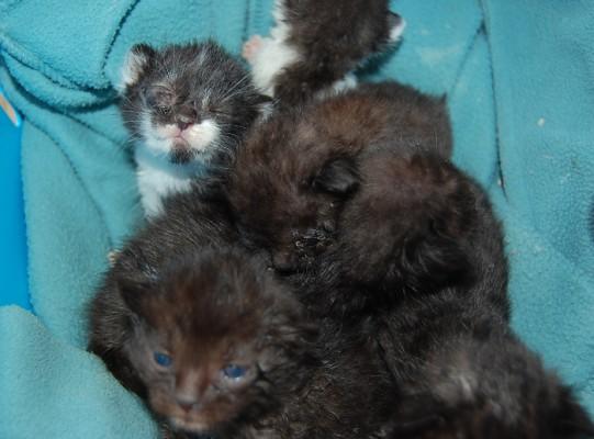 Katzenbabies 2-5