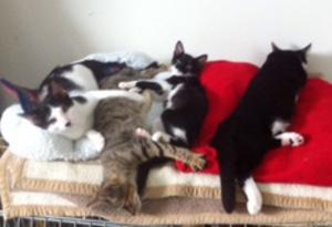 Katzenkinder 1-2