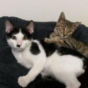 Portrait Charly und Tigerle