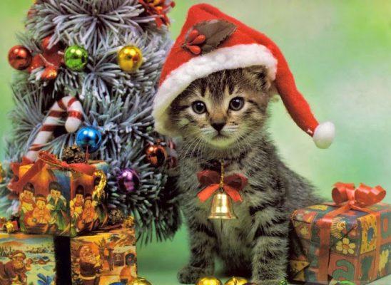 Tierische Weihnachtsgrüße.Tierische Weihnachtsgrüße 2016 Amistico De