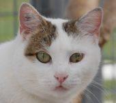 Portrait Lyra
