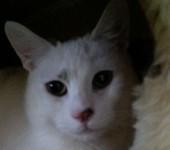 Portrait Olaf