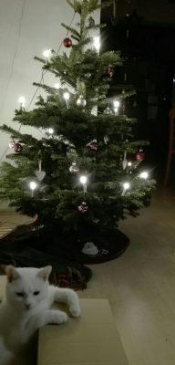 zebulon-weihnachten-3
