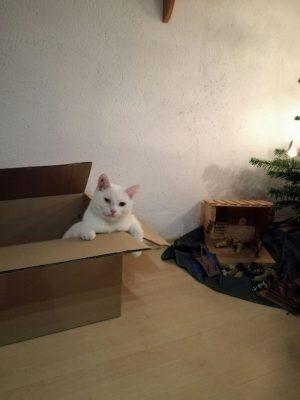 zebulon-weihnachten-2