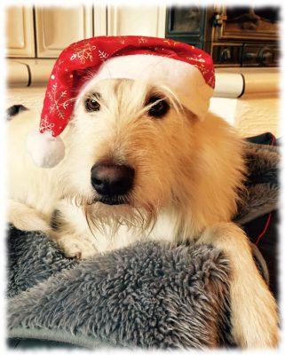 teddy-1-weihnachten