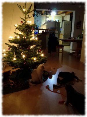 zebulone-und-minou-weihnachten