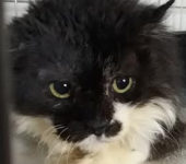 Portrait Pongo