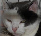 Portrait Minette