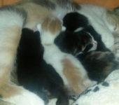 Portrait Katzenmama mit 5 Babys