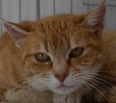 Portrait Tumy