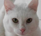Portrait Raoul