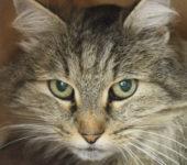 Portrait Katzy