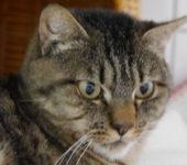 Portrait Poussy