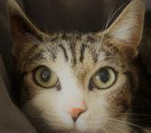 Portrait Kitty