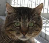 Portrait Tomcat