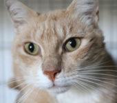 Portrait Caramel