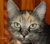 Portrait Olympee