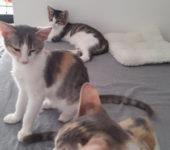 Portrait Athina, Elena und Julius