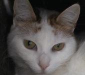 Portrait Hasia