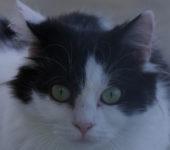 Portrait Lulu