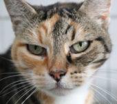 Portrait Linette