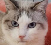 Portrait Bulma
