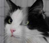Portrait Felix