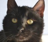 Portrait Tito