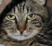 Portrait Grumpy