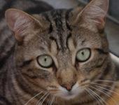Portrait Ernest