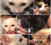 Portrait Eleni, Kasimir, Rosalie, Yuki, Aspro, Aris