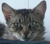 Portrait Paprika