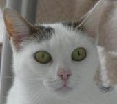 Portrait Espelette